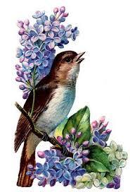 Threshold Aqua Peach Birds Floral 758 Best Ephemera Birds U0026 Flowers Images On Pinterest Painting