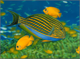Cute Wallpapers For Kids Types Of Fish Pictures Hd Wallpaper Download Awesome Hd