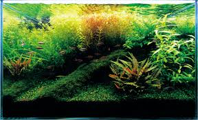 aquascaping layouts with stone and driftwood ada fish aquariums the worlds best planted aquarium products