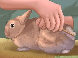 Rabbit Hutch For 4 Rabbits How To Care For A Rabbit With Pictures Wikihow