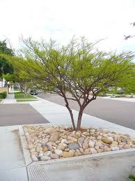 Modern Front Yard Desert Landscaping With Palm Tree And Best 25 Desert Trees Ideas On Pinterest Garden Ideas In Front
