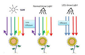light and plant growth led grow lights in all levels plant growth support