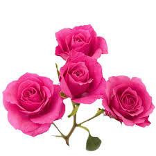 bulk roses pink spray bulk roses