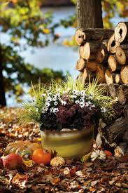 ideas about fall container gardening with small potted flower