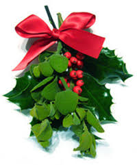 where to buy mistletoe mistletoe buy mistletoe sprigs online always fresh at mistletoe