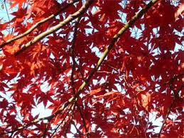 autumn leaves and fall colors why do autumn leaves change color