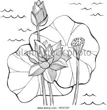 lily flower vector symbol stock photos u0026 lily flower vector symbol