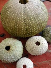 diy sea urchin snow ornament