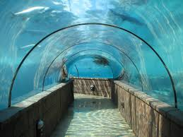 Atlantis Bahamas by Atlantis Bahamas Predator Lagoon Tunnel Islands And Dreams