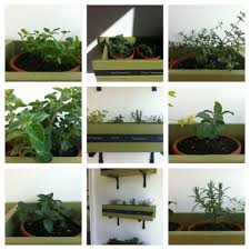 diy herb boxes for a sunny corner the dinner concierge