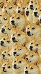 Meme Wallpaper For Iphone - doge wallpaper wallpaper pinterest doge wallpaper and artsy
