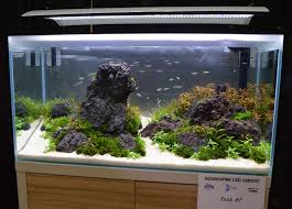 Aquarium Aquascapes Aquascaping Live 2016 Large Tank Entries U0026 Results