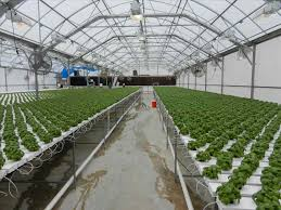how to kitchen design commercial greenhouse design and layout dr house