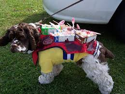 top 10 ways to win a dog halloween costume contest fidose of reality