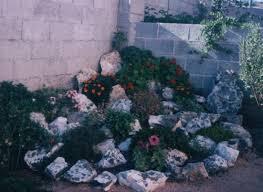 giardini rocciosi in ombra help come creare un giardino roccioso forum di giardinaggio it