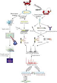 mass spectrometric characterization of the crustacean