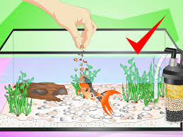 how to set up a fish tank for goldfish 10 steps with pictures