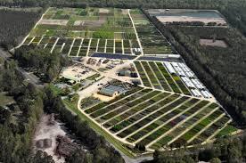 wholesale nursery fayetteville nc green biz nursery and landscaping
