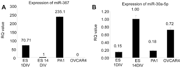 human cancer cell line micrornas associated with in vitro