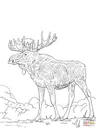 eurasia elk coloring page free printable coloring pages