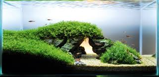 Aquascape Design Fish Tank Ideas Famous Landmark In Your Aquarium Features