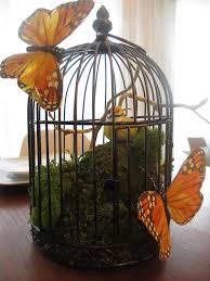 butterflies moderella