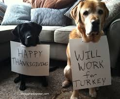 thanksgiving food safety for dogs things going around