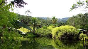 Cairns Botanical Garden by Mietwagen Cairns Preisvergleich U0026 Tipps In Australien