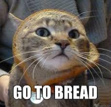 Cat Breading Meme - ceiling cat meme google search puss in bread pinterest