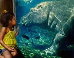 hours u0026 prices saint louis zoo