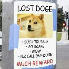 Lost Doge Meme - lost doge lolz pinterest doge memes and humor