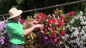 hanging basket plants for sun standout performers of 2014 part 1 hanging baskets youtube