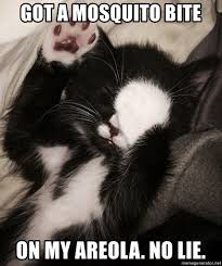 No Lie Meme - got a mosquito bite on my areola no lie embarrassed cat meme