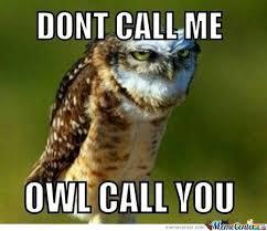 Funny Owl Meme - owl by 2funny4you meme center