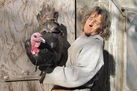 raising a better turkey for thanksgiving cuesa