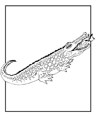 free printable alligator coloring pages kids clip art library