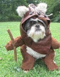 Chihuahua Halloween Costumes Halloween Costumes Dogs 001 Tom Dwyer Automotivetom Dwyer