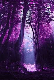 purple trees pictures photos and images for