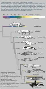 whale evolution data table answer key idiots once again justify their name hippopotamus creatures and