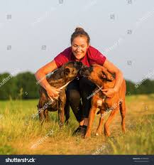 2 female boxer dogs together portrait teenage together two boxer stock photo 654700528