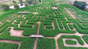 best corn mazes ny has to offer including amazing maize maze