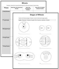 best 25 mitosis ideas on pinterest cell biology study guides