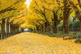 from northern ireland to japan the world s most beautiful tree