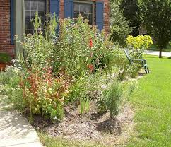 native michigan plants native plants unlimited rain gardens