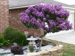 Fall Garden Plants Texas - 25 best houston garden ideas on pinterest