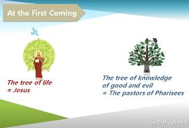 shincheonji seed shincheonji testify the tree of