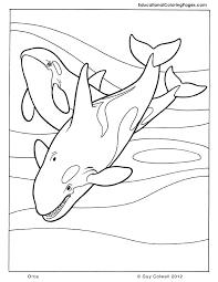 killer whale coloring pages u2013 vonsurroquen