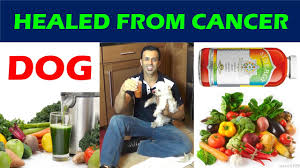 dog healed from cancer natural cancer treatment youtube