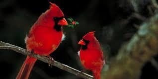 Backyard Wild Birds At Their Regular Perches 4 Birds That Love Your Backyard Feeder