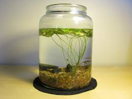146 best indoor water gardens images on pinterest indoor